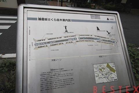 播磨坂桜並木案内板