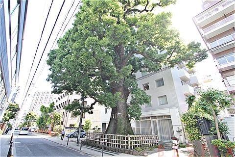 樹齢400年超
